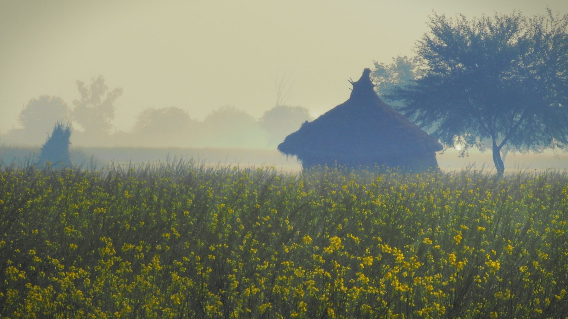 "Picturesque winter fields of blossoming mustard, Vrindavan, India. A still from a multi-award winning film ""reconnection""."